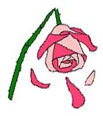 Labour Broken rose image